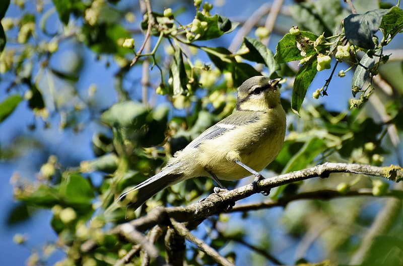 Yellow and gray bird on tree branch during daytime