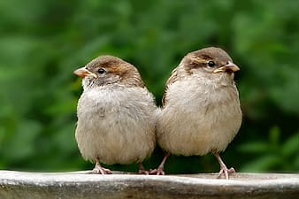Two brown birds on panel