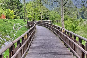 Brown wooden bridge surrounded with trees