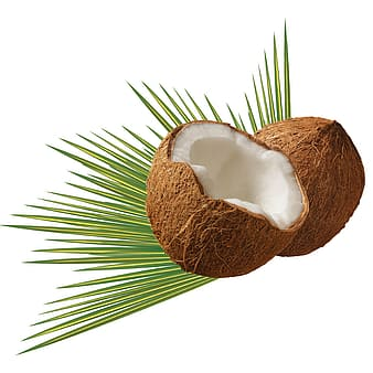 Still life photograph of coconut