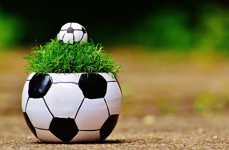 Soccer-themed plant pot in shallow photography