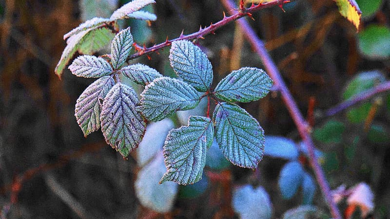 Green leaf plant with snow