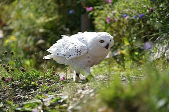 Shallow focus photography of white owl
