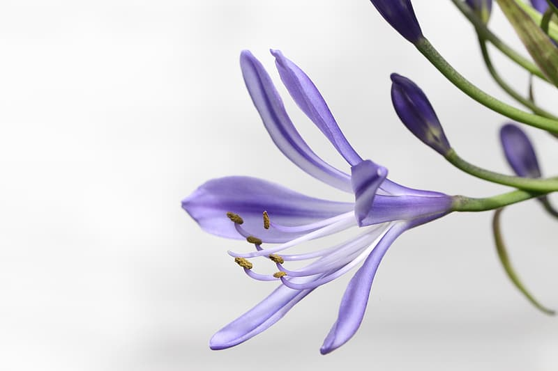 Purple and white petaled flower