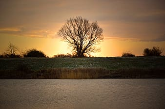 Leafless tree near body of water during sunset