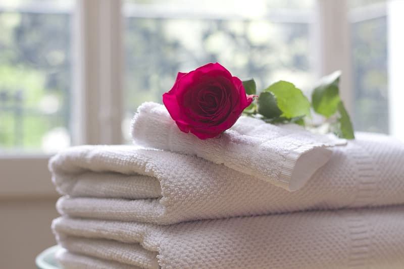 Red rose on top of white towels near window