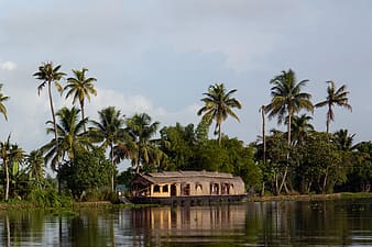 Brown wooden house on body of water surrounded by palm trees during daytime