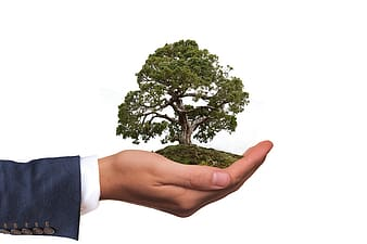 Person holding Tree Of Life figurine