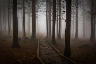 Pathway between trees with fogs