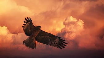 Photo of brown bird under clouds during noontime