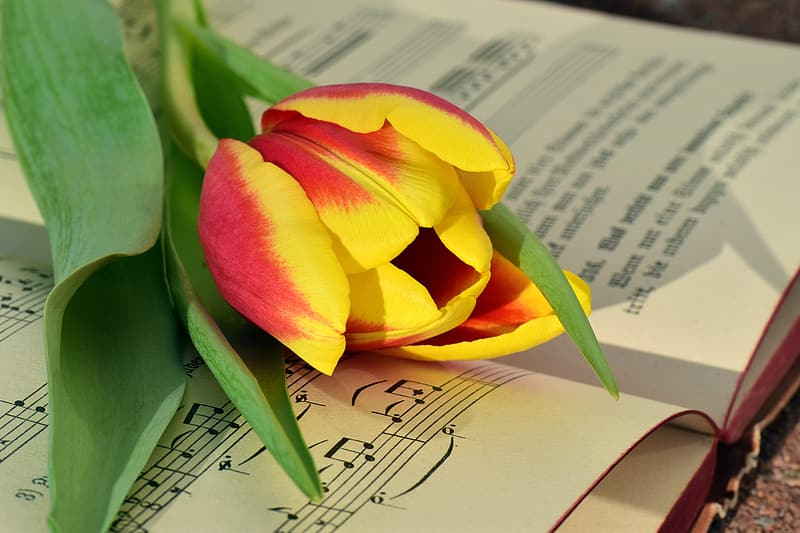 Yellow and red flower on open book