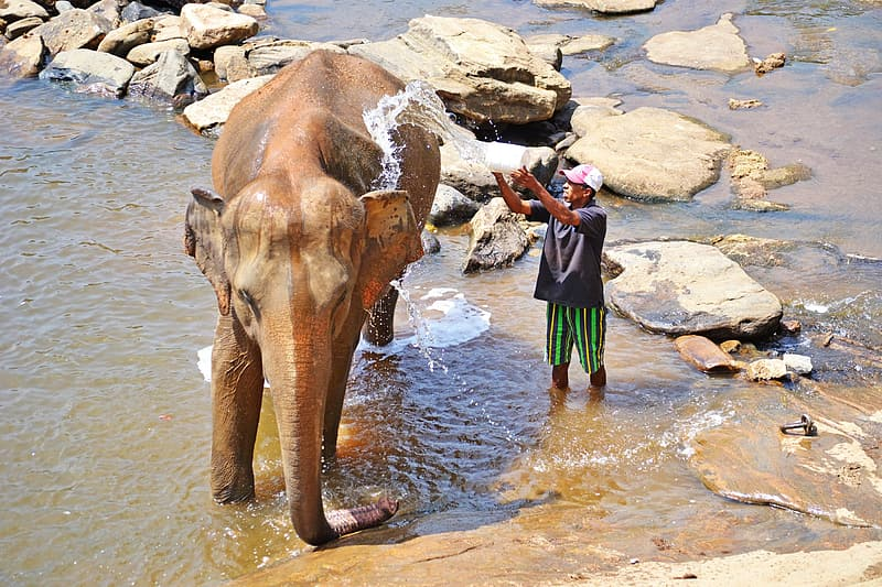 Man in red jacket riding on brown elephant on water during daytime