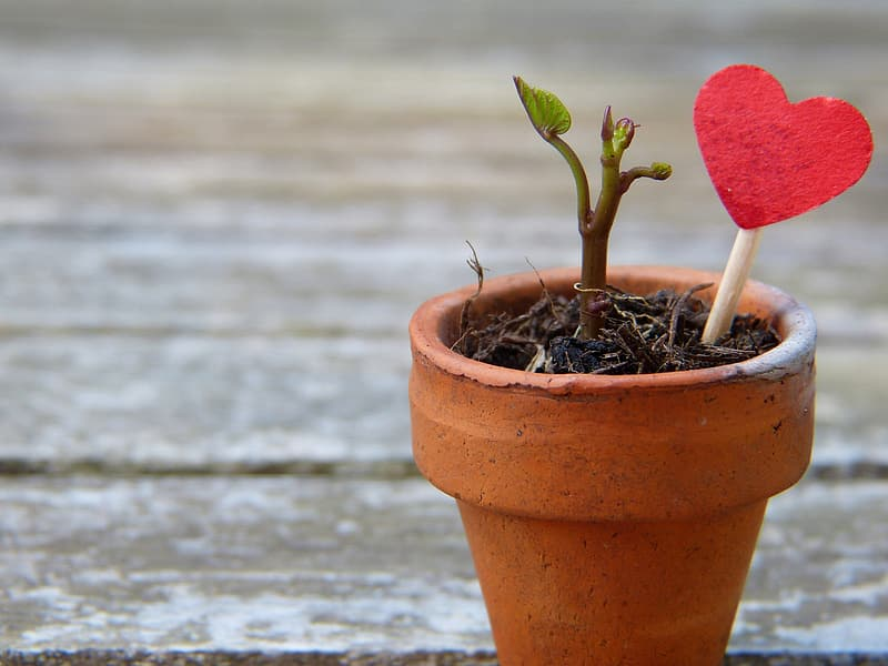 Red heart on stick stumped on plant pot