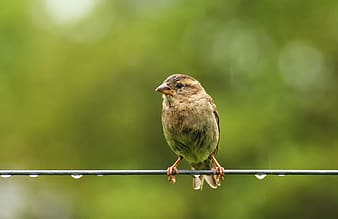 Brown bird perched on wire