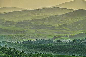 Landscape photo of green leafed trees within mountain range