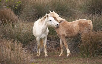 Two brown and white horse on grass field at daytime