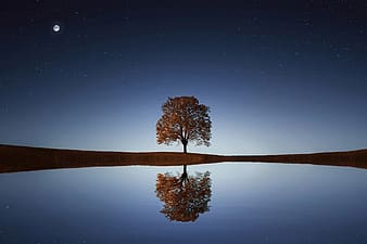 Body of water with tree under full moon