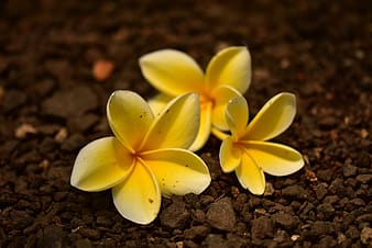 Yellow and white flower on brown soil