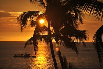 Silhouette photograph of palm tree