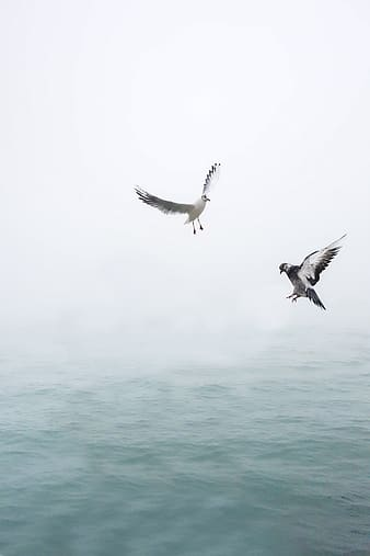 Two grey pigeons above body of water during daytime
