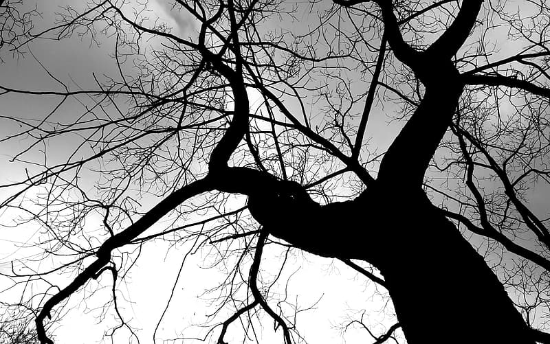 Bare tree under white clouds