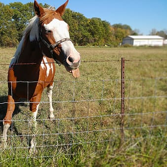White and brown horse at the ranch