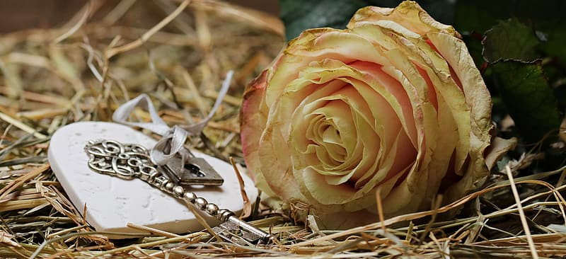 Yellow rose flower beside silver-colored skeleton key and silver-colored padlock on withered grasses