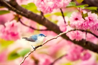 Blue and white bird on tree branch in selective-focus photography