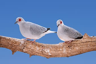 Two white birds on brance