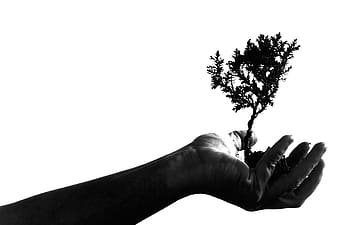 Grayscale photography of person's hand holding plant
