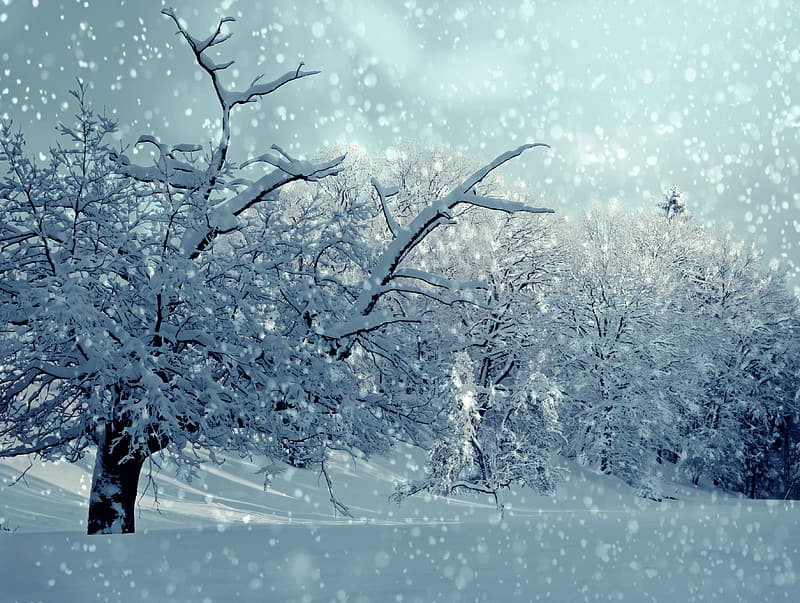 Snow covered filled and trees under gray sky