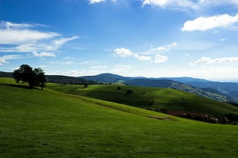 Green grass field and green trees under blue sky during daytime