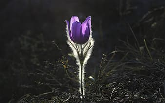 Shallow focus photography of lavender flower