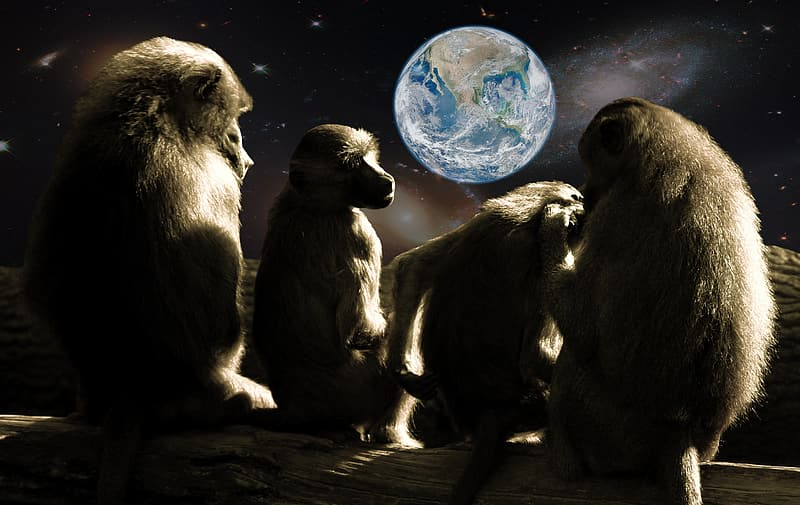 Four monkeys sitting while looking at the Earth