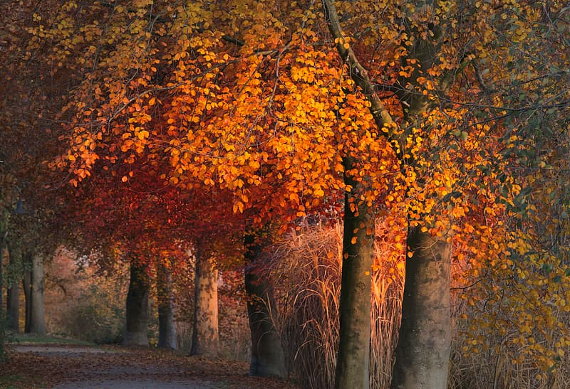 Brown and yellow leaves on trees