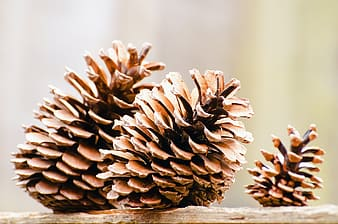 Closeup photography of three brown pinecones