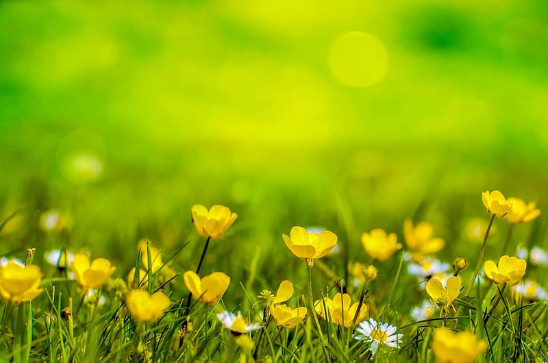 Shallow focus photography of yellow flower field