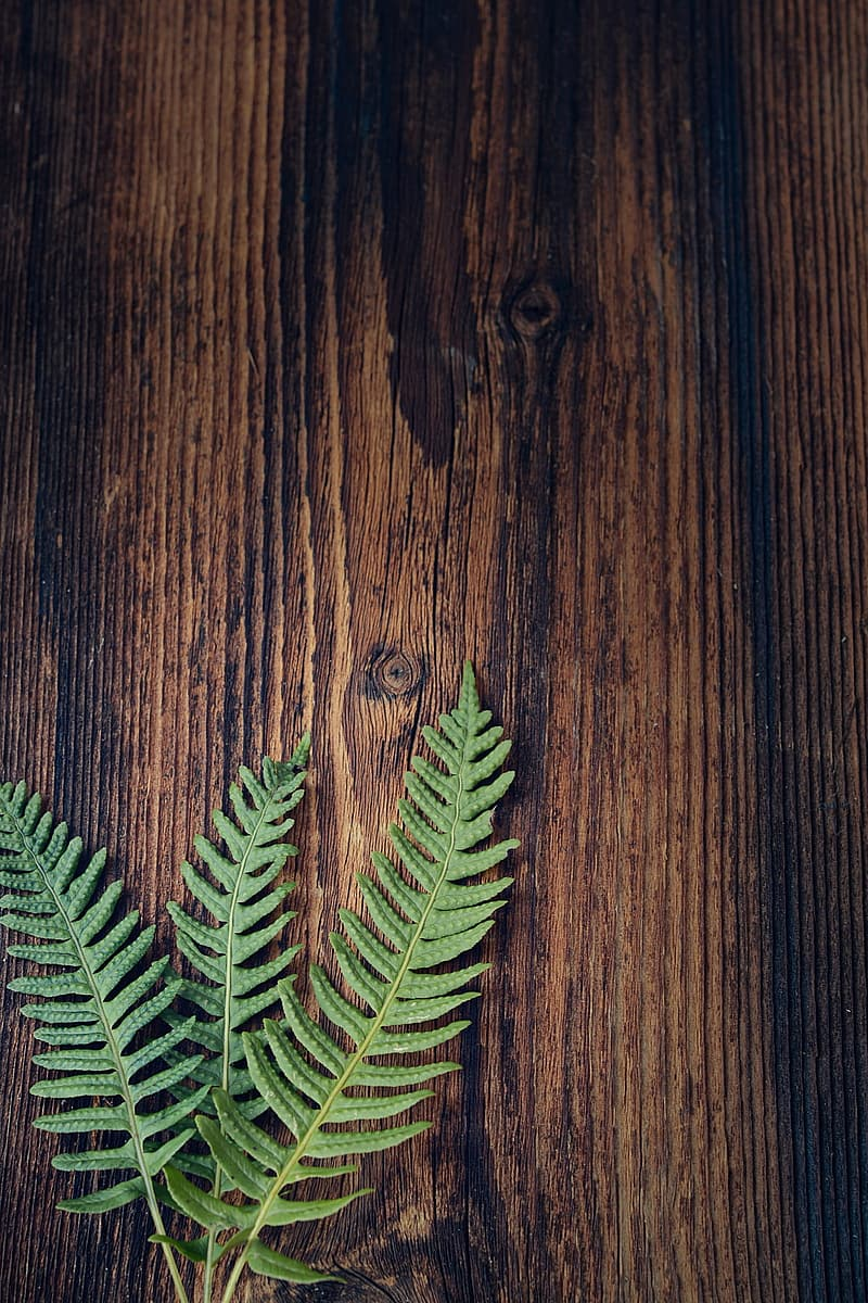 Green fern plant on brown wooden surface
