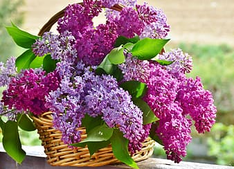 Purple petaled flowers in basket