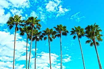 Palm trees under semi-cloudy daytime sky