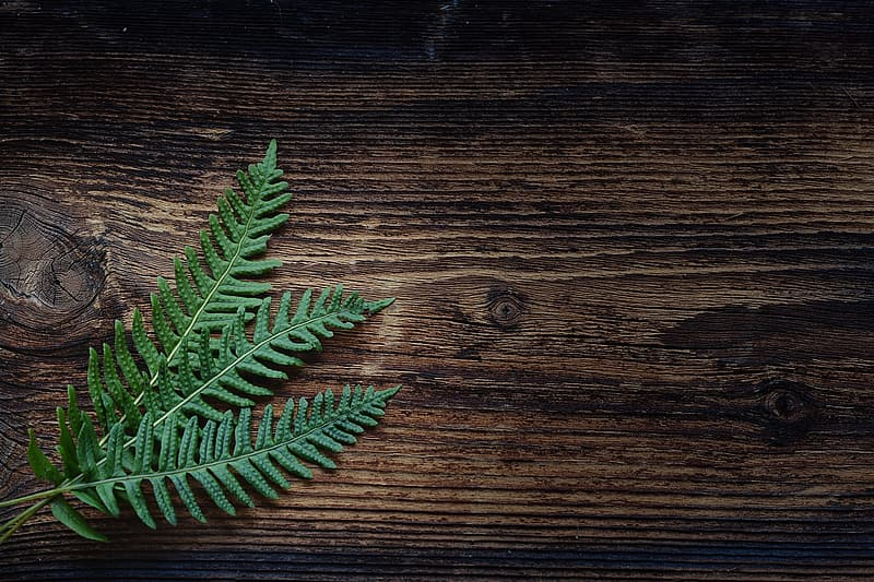 Green leaf plant on brown wooden table top