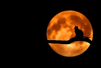 Silhouette of cat on tree branch