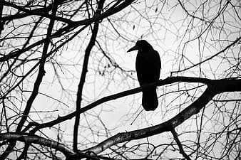Silhouette of bird on bare tree