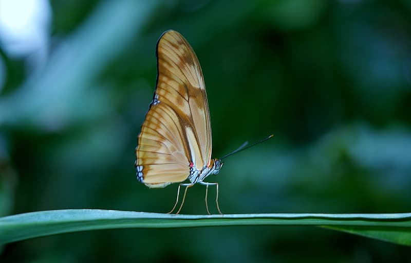Brown butterfly in micro photography