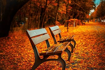 Two brown picnic chairs near on brown tree