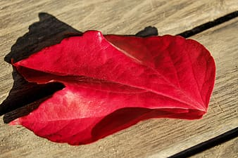 Red leaf on brown wooden surface