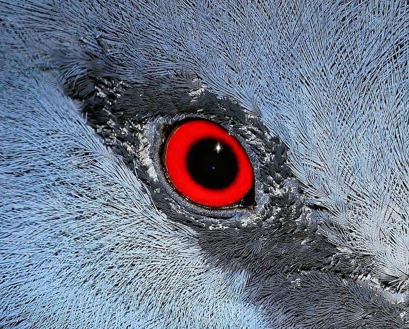 Red and white animal's eye