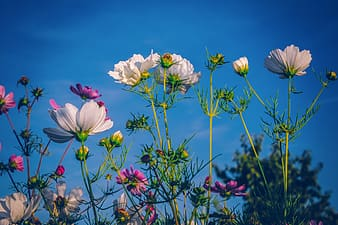 White and purple flower under blue sky during daytime