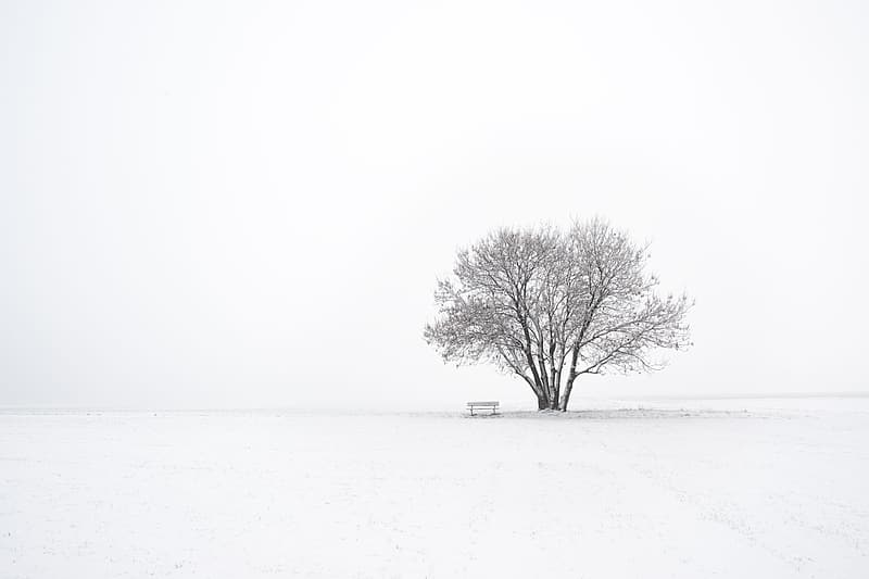 Bare tree on snow covered field during daytime