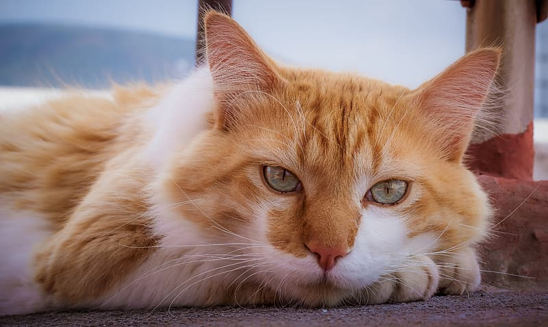 White and brown cat on floor
